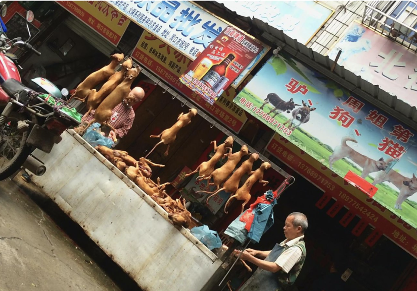 china dog meat